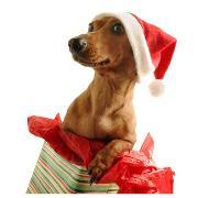 Новый год, Дед Мороз и другие звери