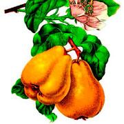 Заготовки на зиму: домашний мармелад с яблоками и имбирем