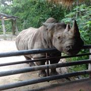 Таиланд любителям животных: зоопарки Паттайи и Бангкока