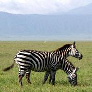 В Африку – на сафари: слоны, львы, жирафы из окна машины