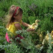 На деревню бабушке. Как 5-летняя дочка доит коров и кормит свиней