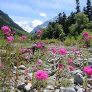 Архыз 2015. Почему несколько дней в горах лучше отдыха на море