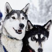 Отдых на Новый год: Финляндия. Горные лыжи и северное сияние