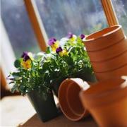 Растения в контейнерах: как оформить балкон и садовый участок