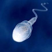 Аденома простаты и мужское бесплодие – есть ли связь?