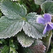 Заморозки и сад весной: защита растений во время цветения