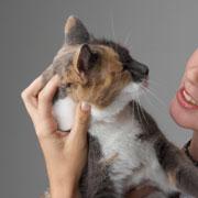 Кот метит в квартире? Кастрация котов и уход после операции