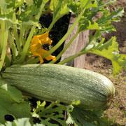 Овощи для детей на даче: что посадить? 7 идей