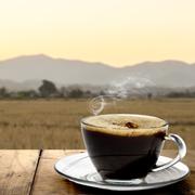Какой кофе купить? Зеленый кофе и кофе без кофеина: в чем секрет?