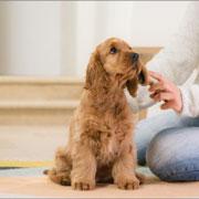 Собака какой породы вам нужна? 9 вопросов - прежде чем купить щенка