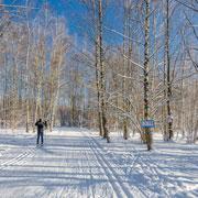 Где покататься на беговых лыжах: 7 адресов в Подмосковье