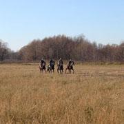 Где покататься на лошадях в Москве? 7 конных клубов, недорого