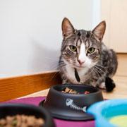 Чем кормить кошку: сухой корм – или мясо и рыба?