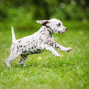 Как приучить щенка к туалету и еще 9 советов по воспитанию щенка