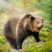 Медвежонок в рабочем поселке: обязательно что-нибудь случится