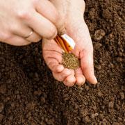 Когда сеять помидоры, морковь, сажать картошку. 8 ошибок при посеве семян