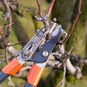 Обрезать ли деревья весной? Обрезка и обработка сада от вредителей