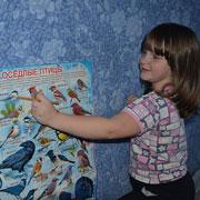 Как рассказать ребенку про птиц: картинки, видео, загадки