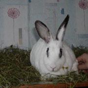 Братец Стёпка. Как мы спасли домашнего кролика от тараканьей морилки