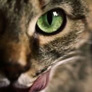 Как кошка Ёжка летала с балкона