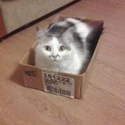 Кошка Бусинка: таскает сосиски, жалеет ребенка и прячется в сапоге