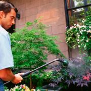 Опрыскивание сада весной и еще 15 дел на даче в мае