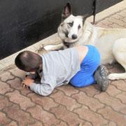 Правнук Илья и дворняга Маня: ведут себя как две собаки