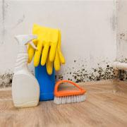 Как избавиться от домашнего грибка