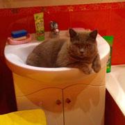 Ревнивый кот Жульен: любит дочку и научился не замечать мужа