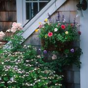 Как красиво посадить цветы на даче? Кашпо для цветов своими руками