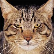 Новый год для кошки. 'Вредные советы'