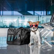 На отдых с собакой: за границу и в России. Правила перевозки собак в поезде и самолете