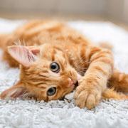 Как избавиться от клещей и блох у кошки? Как избавиться от глистов?