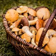 Как правильно солить и мариновать грибы: белые, рыжики, грузди