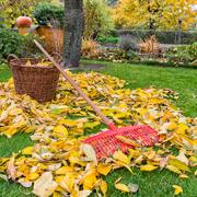 Как подготовить деревья и кусты к зиме: 9 дел на даче осенью
