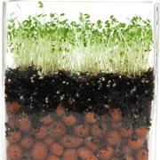 Как правильно хранить семена: на даче или в городской квартире?