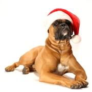 Рождественский пес. Первое декабря