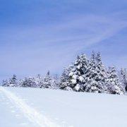 Прогулка с ребенком: чему научиться в зимнем лесу