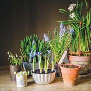 Эмма Митчелл: Выгонка луковиц в домашних условиях – в подарок на 8 марта