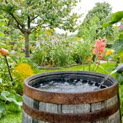 Что купить для опрыскивания растений в саду и огороде?