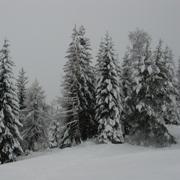 Праздничное дерево