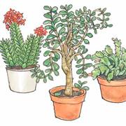 Кеннерт Даниельсон: Как Финдус и Петсон цветы пересаживали: сказка и опыты для детей