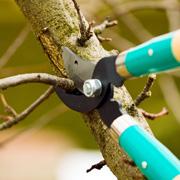 Как правильно обрезать деревья? 2 способа весенней обрезки – для мужчин и женщин