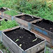 Ребенок хочет посадить огород? Выращивайте бобы