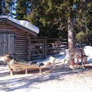 Финляндия весной - лучшее время покататься на лыжах