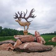 Поляева Елена: Природный парк 'Олений' в Липецкой области: здесь есть не только олени!