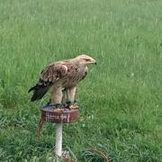 Поляева Елена: На выходные в Елец: сирень, хищные птицы и олени