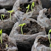 Многолетники из семян. Путь к успеху. Часть 1