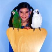 Не купить ли попугая?