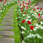 Тюльпаны: садоводство для 'чайников'